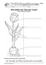 Blume in der Grundschule - Frühblüher - Frühling - Jahreszeiten ...