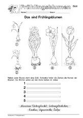 Frühling in der Grundschule - Jahreszeiten - HuS Klasse 1 ...
