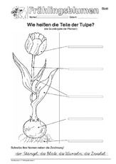 Arbeitsblatt in der Grundschule - Frühling - Jahreszeiten - HuS ...