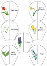 Blume in der Grundschule - Grundschulmaterial.de