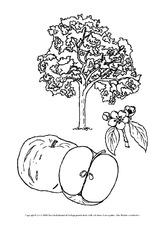 Ausmalbilder Apfel In Der Grundschule Malen Und Basteln Herbst