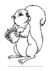 Ausmalbilder Eichhörnchen In Der Grundschule Ausmalbilder Herbst