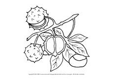 Ausmalbild Herbstfrüchte In Der Grundschule Ausmalbilder Herbst