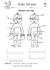 Körperbau in der Grundschule - HuS - Unterrichtsmaterial ...