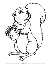 Eichhörnchen In Der Grundschule Ausmalbilder Eichhörnchen