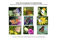 Leporello-Schmetterlinge-Fotos.pdf