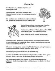 apfelbaum in der grundschule arbeitsb gen lesetexte der apfel hus klasse 2. Black Bedroom Furniture Sets. Home Design Ideas