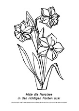 Ausmalbild Narzissen 2 Ausmalbilder Blumen Frühling