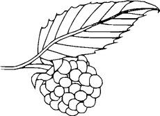 Grafik In Der Grundschule Obst Bilder Obst Gemuse