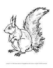 Ausmalbild Eichhörnchen In Der Grundschule Eichhörnchen Werkstatt