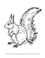 Ausmalbild Eichhörnchen In Der Grundschule Ausmalbilder