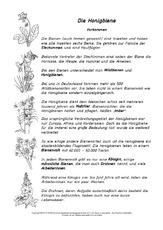 lesetextehonigbiene honigbienewerkstatt hus klasse 3