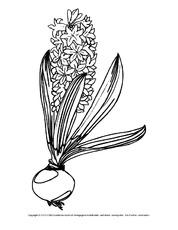 Ausmalbild Kornblume Ausmalbilder Blumen Frühling Jahreszeiten