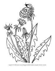 Arbeitsblatt In Der Grundschule Ausmalbilder Blumen Frühling
