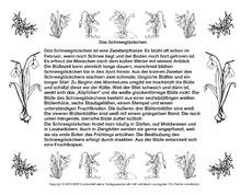 schneegl ckchen arbeitsblatt in der grundschule abschreib lesetexte fr hbl her fr hling. Black Bedroom Furniture Sets. Home Design Ideas
