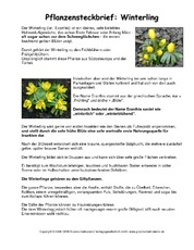 Steckbrief-Winterling.pdf