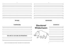 wildschwein steckbriefvorlage sw tiersteckbrief vorlagen sw steckbriefe tiere sachthemen. Black Bedroom Furniture Sets. Home Design Ideas
