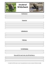 Wildschwein steckbrief