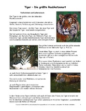 Tiger-Steckbrief.pdf