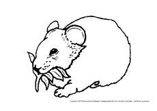 ausmalbild in der grundschule - tiere zum ausmalen - tiere