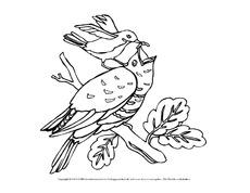 Ausmalbild Vögel Für Projekte In Der Grundschule Ausmalbilder