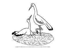 Huhn Tiere Gemischt Tiere Zum Ausmalen Ausmalbilder
