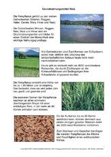 Reis (Arbeitsblatt) in der Grundschule - HuS - Unterrichtsmaterial ...
