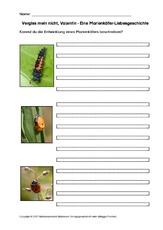 insekten sonstiges in der grundschule hus unterrichtsmaterial. Black Bedroom Furniture Sets. Home Design Ideas