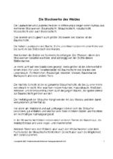 Arbeitsblatt In Der Grundschule Stockwerke Des Waldes