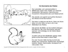 wald arbeitsblatt in der grundschule lebensraum wald themen und projekte hus klasse 4. Black Bedroom Furniture Sets. Home Design Ideas