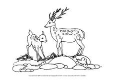 Lebenraum Wald In Der Grundschule Hus Klasse 4