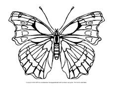 Schmetterling Arbeitsblatt In Der Grundschule