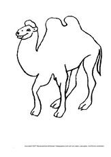 Kamel in der Grundschule  Tiere zum Ausmalen  Ausmalbilder