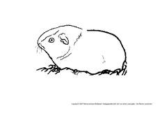 Ausmalbild In Der Grundschule Tiere Gemischt Tiere Zum Ausmalen