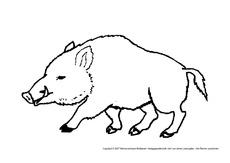 Wildschweine Wildschwein Schweine 20 Paarhufer Säugetiere