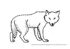 Wolf In Der Grundschule Tiere Zum Ausmalen Ausmalbilder