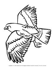 Ausmalbild Adler Ausmalbilder Vögel Vögel Tiere