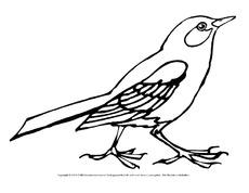 Amsel In Der Grundschule Vögel Tiere Zum Ausmalen Ausmalbilder