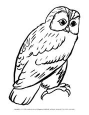 Eule In Der Grundschule Vögel Tiere Zum Ausmalen Ausmalbilder
