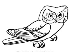 Eule In Der Grundschule Vogel Tiere Zum Ausmalen Ausmalbilder Bildende Kunst Material Klasse 1 Grundschulmaterial De