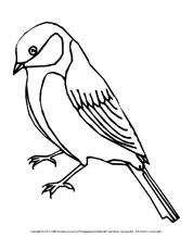 Arbeitsblatt In Der Grundschule Vögel Tiere Zum Ausmalen