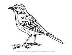 Unterrichtsmaterial Für Einzelarbeit In Der Grundschule Vögel