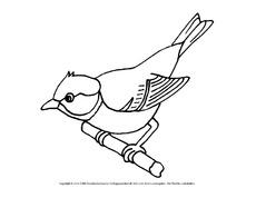 ausmalbilder vogel am futterhaus
