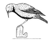 Ausmalbild Vogel In Der Grundschule Tiere Zum Ausmalen