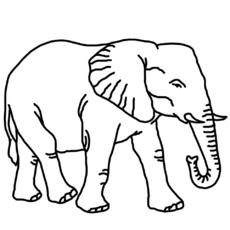 elefant zum ausmalen - newtemp